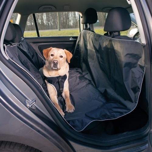 Un animal de compagnie en voiture